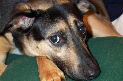 La crémation animale, incinération du chien, du chat ou autres petits animaux...