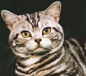 Caractère et comportement du chat