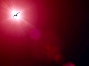 1038721_lensflare_and_bird_1