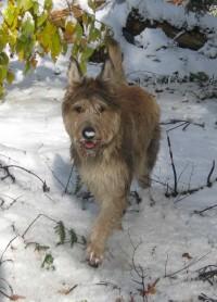 Deva des mandarines Bleues, 1er neige 2009
