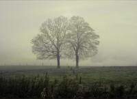 deux-arbres-ensemble