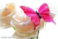 3738186-papillon-rose-avec-des-roses-blanches-sur-fond-blanc