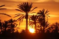 djerba la palmeraie un investissement idéal