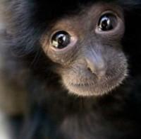 Comportement des Primates milieu naturel et captivité