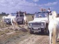 la-camargue-safari-4x4