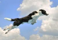 chien épris de liberté !