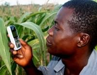 ghana_farmer-on-cell-phone