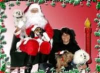 Noël à www.pensionsanscage.com