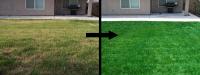 Reverdissement d'une pelouse