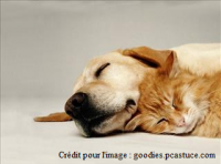 Chien et chat au repos