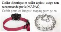 Collier électrique et collier à pics : non recommandés par le MAPAQ
