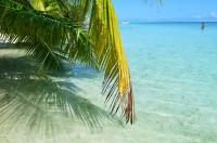 voyage-de-decouverte-au-coeur-des-merveilles-sous-marines-de-la-polynesie-image-1