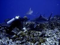 voyage-de-decouverte-au-coeur-des-merveilles-sous-marines-de-la-polynesie-image-2