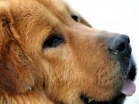assurance-pour-chien