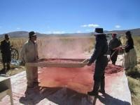Voyage Bolivie Quinoa ALTIPLANO