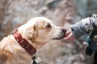 Les différents critères à savoir avant de choisir un chien.