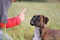 Adopter un bon dressage pour consolider la relation entre vous et votre chien
